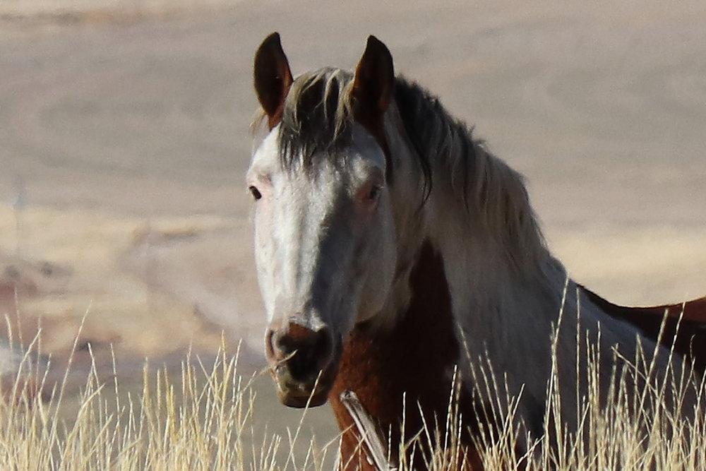 Well-fed stallion