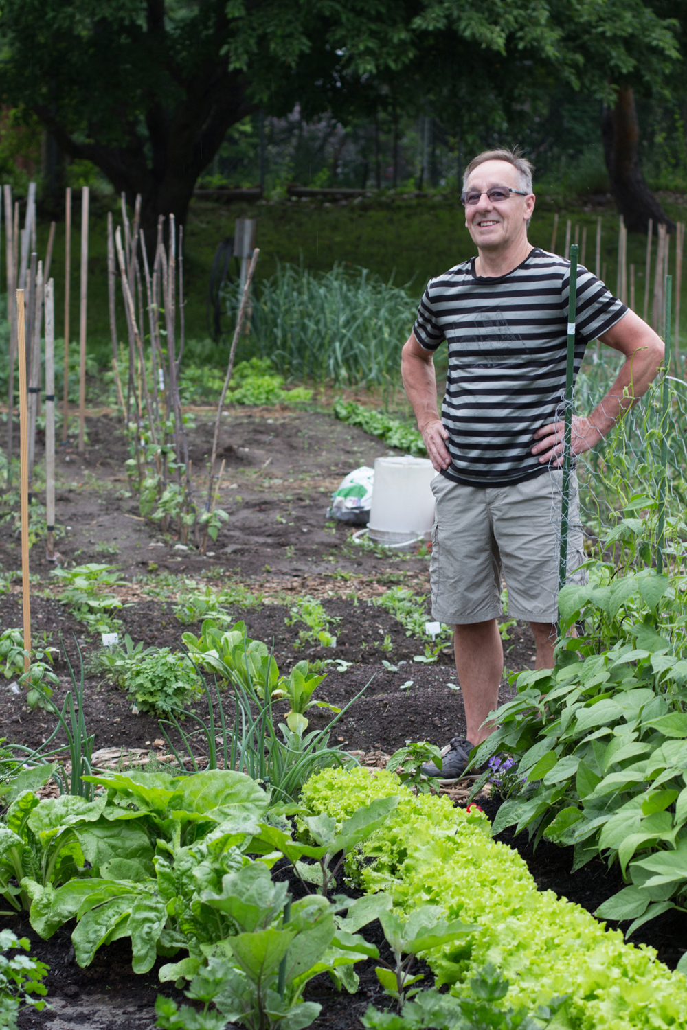 Guy standing behind his vegetable patch at in the Jardin Ahuntsic, a community garden.