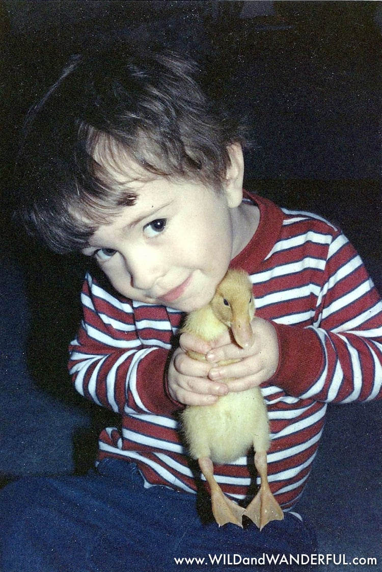 1991 - donald the duck.jpg