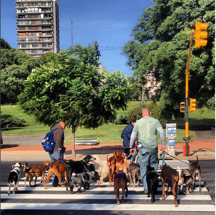 The Dog Walkers - of Buenos Aires