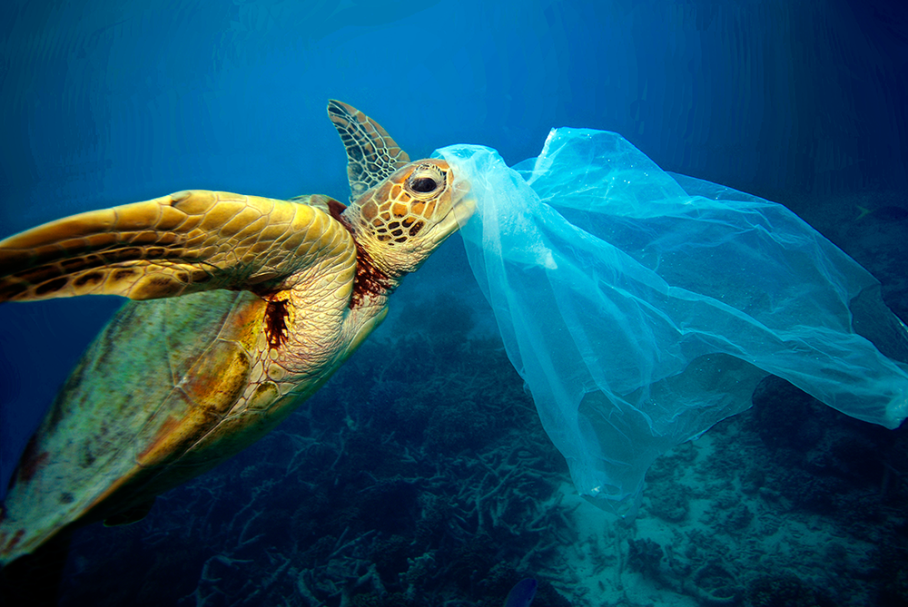 JL-Turtle-Eating-Plastic-Bag-Copyright-Troy-Mayne.png