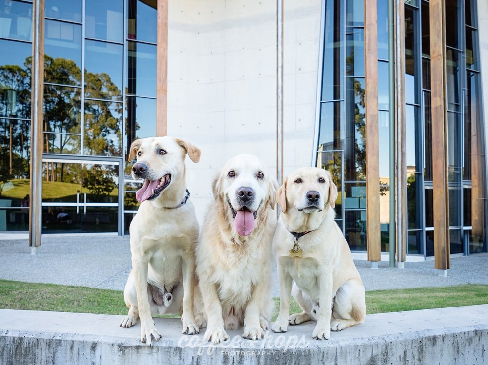 Mav + Co 2017 Gold Coast Pet Photography Session