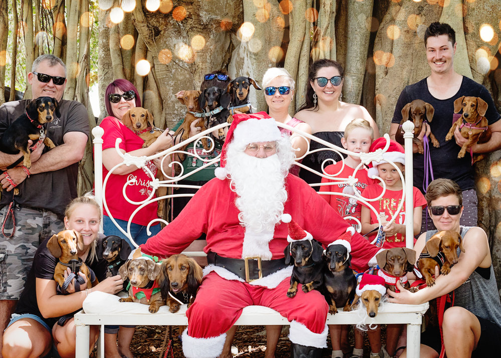 Group of Mackay Dachshund Owners getting one epic group photo with Santa
