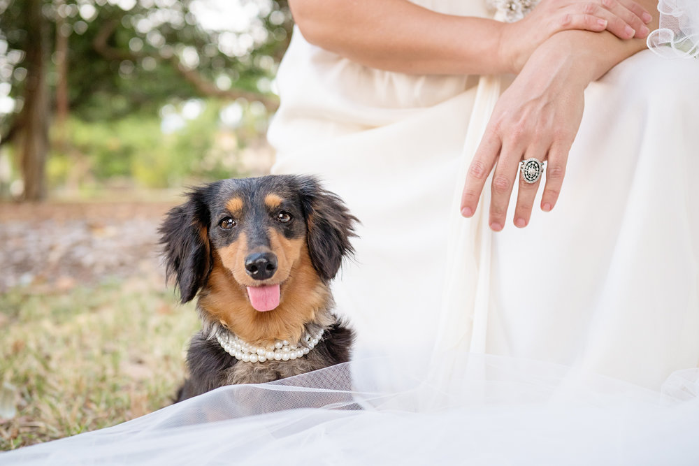 Offering chauffeur service to dogs for family weddings and events in the Mackay area