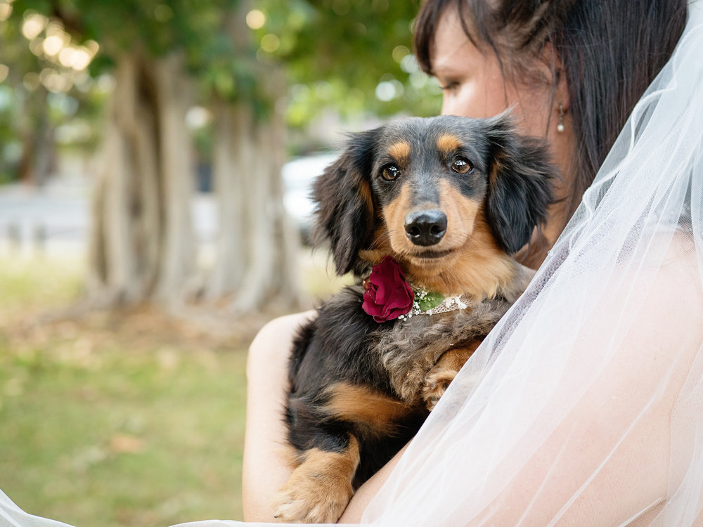 Murphee the dachshund in one of the flower collars you can hire