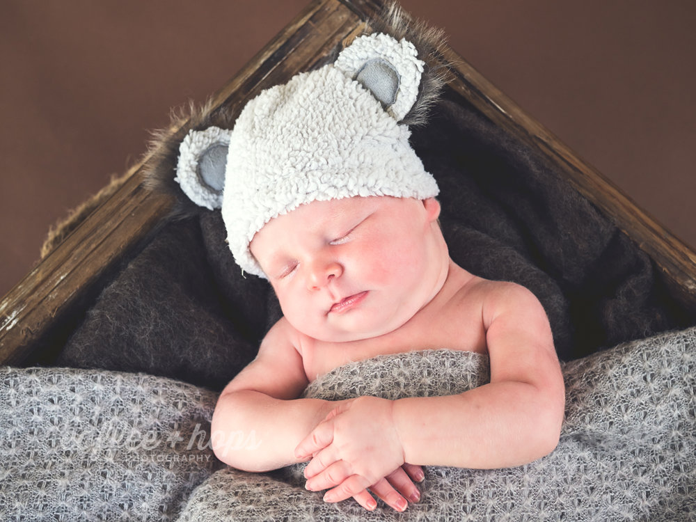 Elisabeth, the cutest little koala, during her newborn photography session.