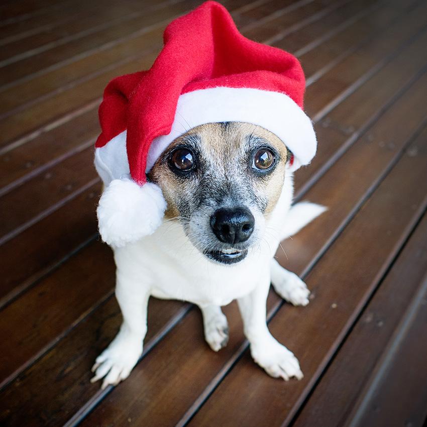 Santa-Sam-Wishlist-for-Santa-2.jpg