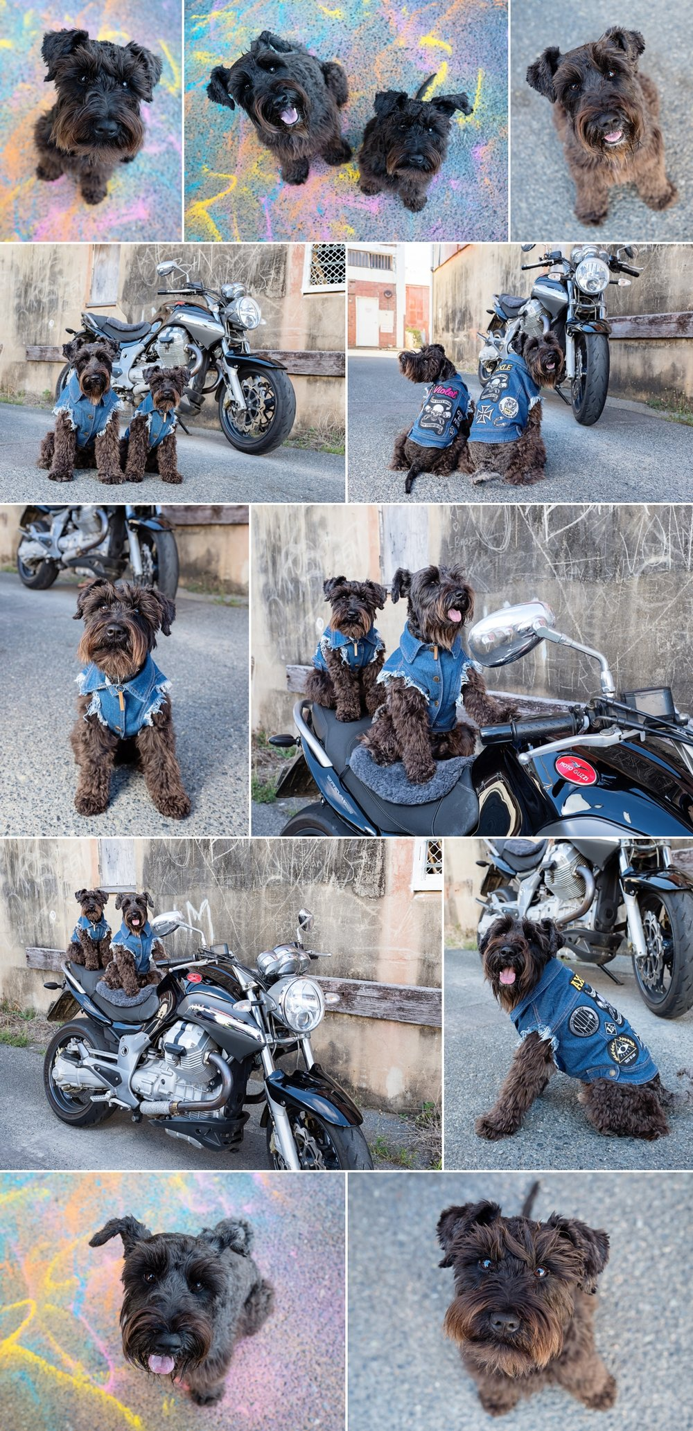 Axle-Violet-Mini-Dog-Session-Gallery.jpg