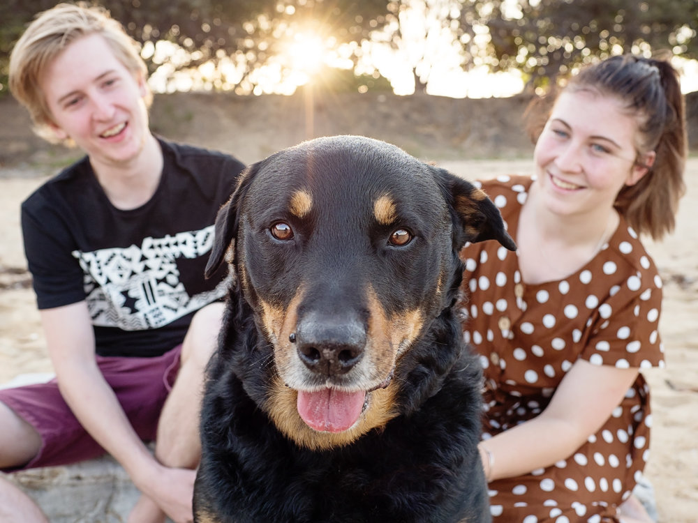 Bear-Pet-Cake-Session-Lamberts-Beach-Mackay.jpg