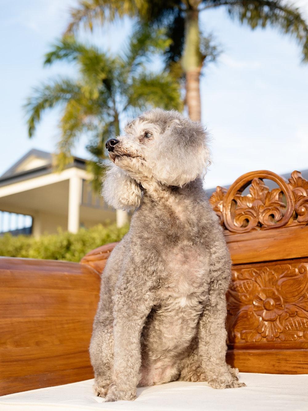 Bunny-Winston-Pet-Session-at-home-Farleigh-Mackay-2.jpg