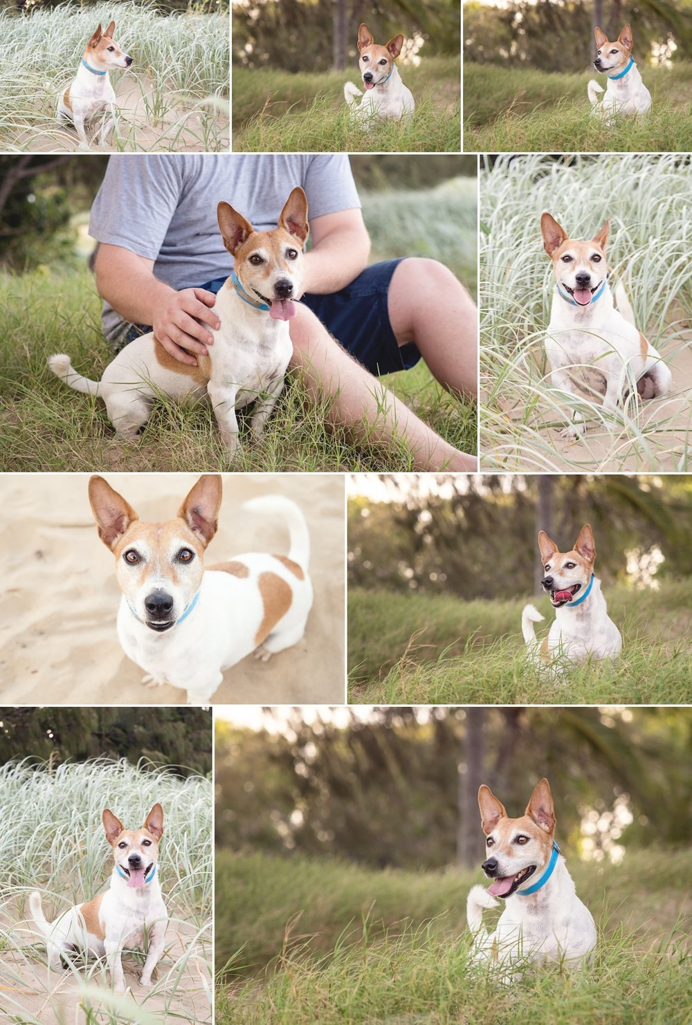 Buddy-the-Jack-Russell-at-Illawong-Beach-Mackay-Gallery-1.jpg