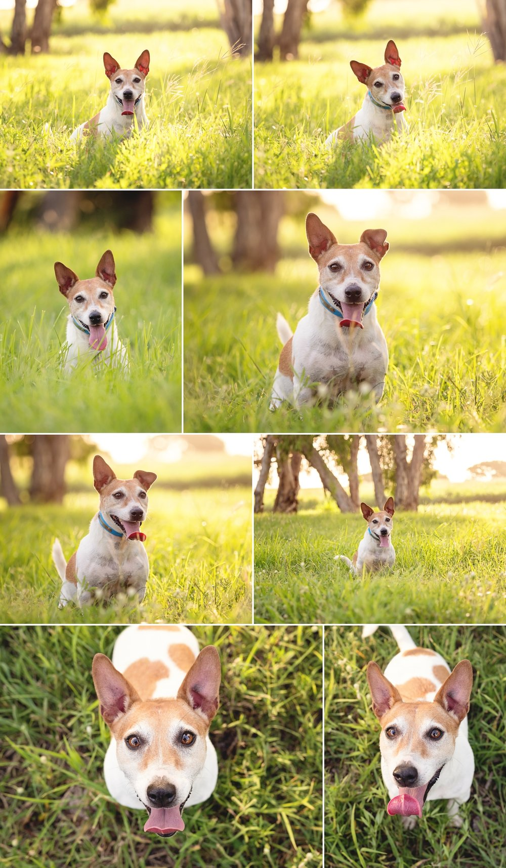 Buddy-the-Jack-Russell-at-Illawong-Beach-Mackay-Gallery-2.jpg