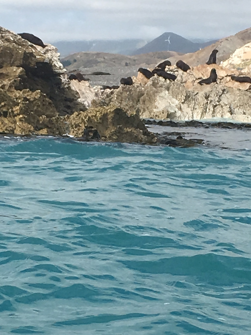 Seals on the rock