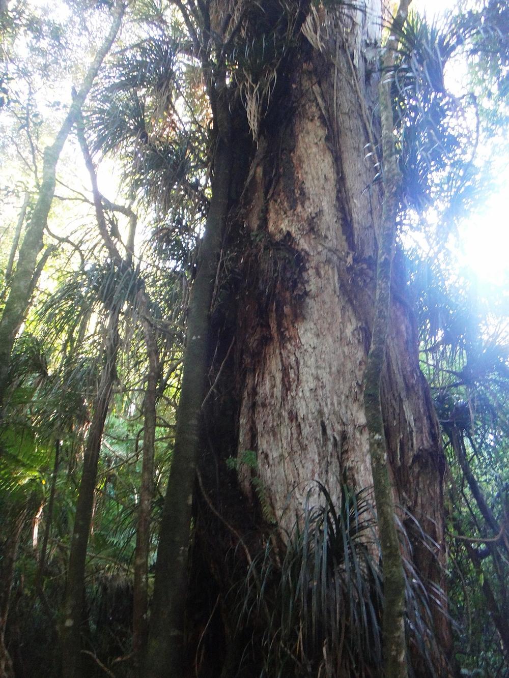 Huge Tree.