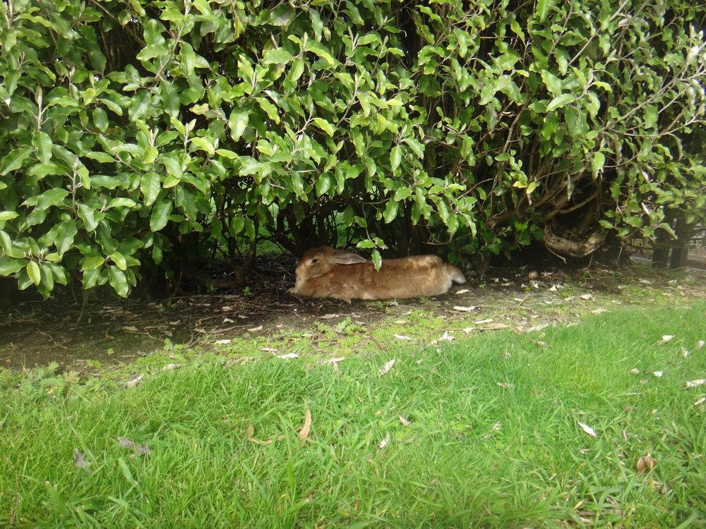 Mr. Rabbit, so cute!