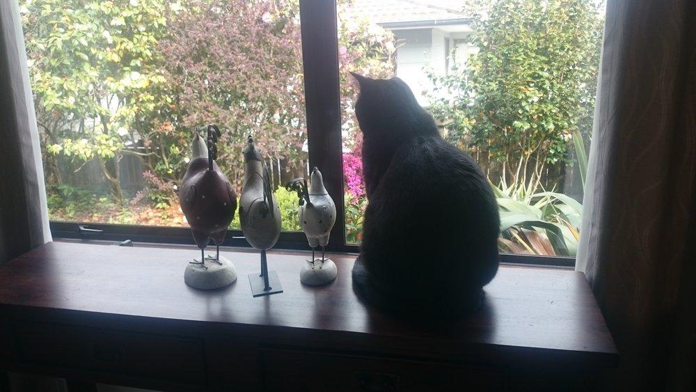 Bennie the cat.