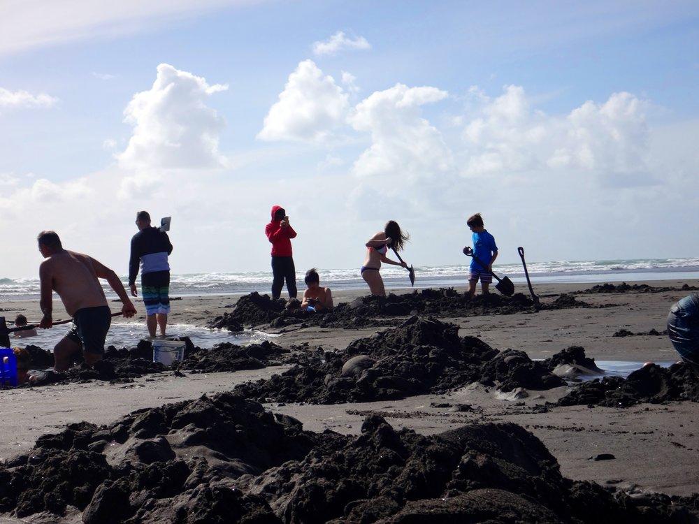 Digging hot water pools,Ocean Beach Kawhia.