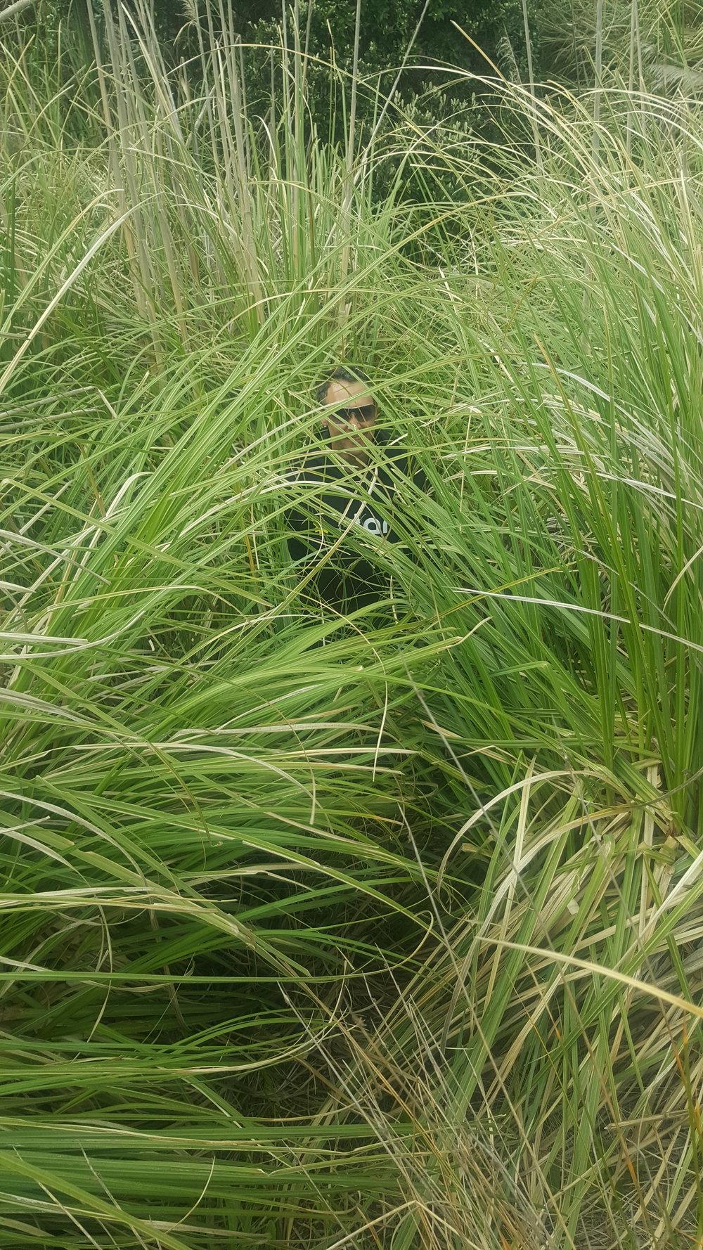 Tall, tall grasses.