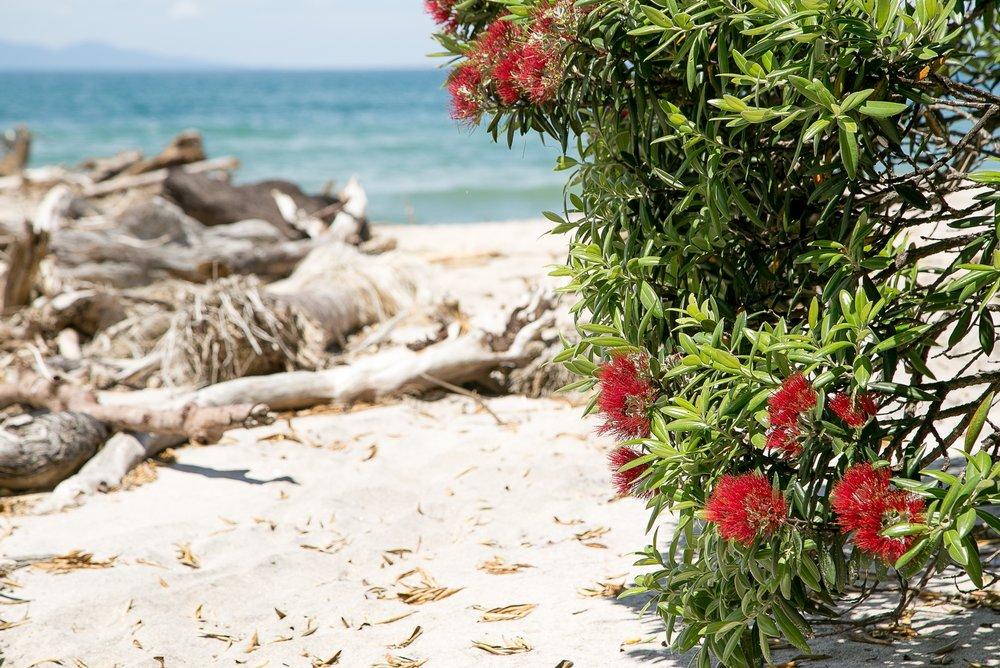 NZ Summer.