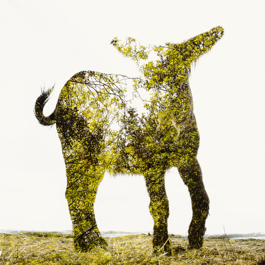 Miranda-Donkey-Foal-Ash-Trees.jpg