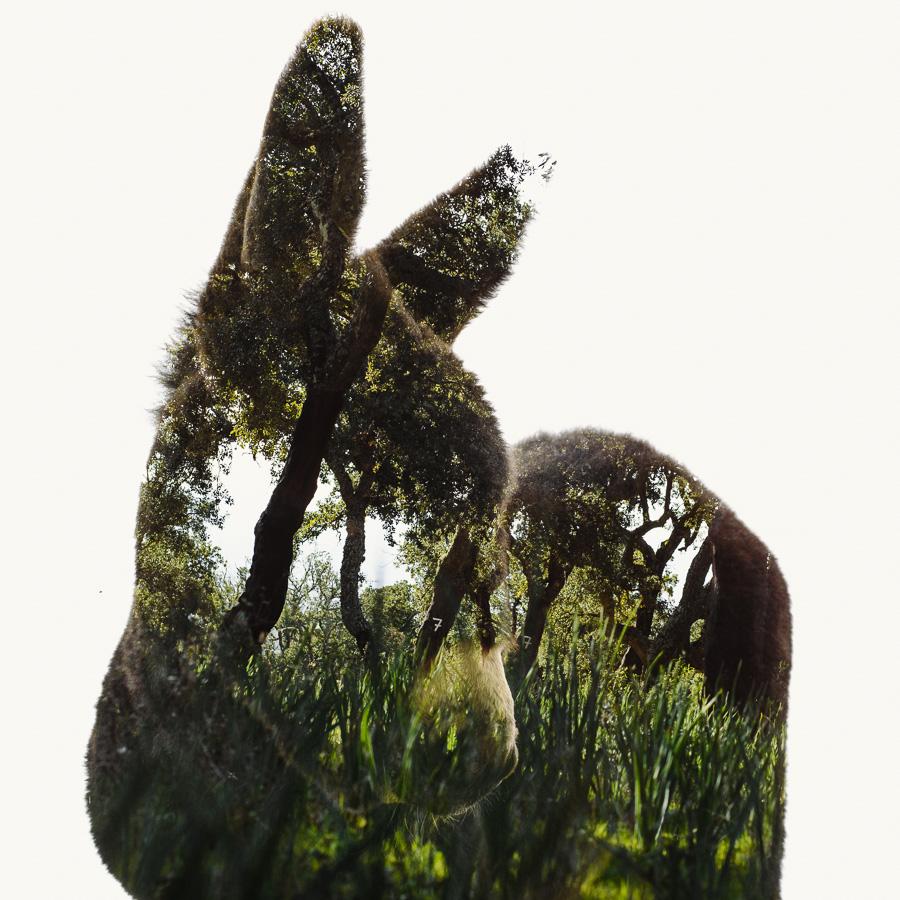 Miranda-Donkey-Foal-Cork-Trees.jpg