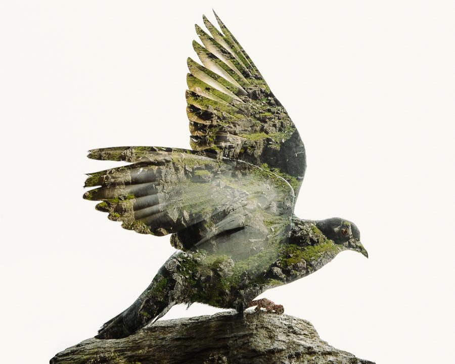 Rock-Pigeon-Douro-Cliffs-II.jpg
