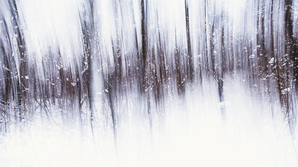 frost-forest.jpg