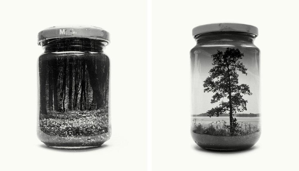 Jarred Wood Anemones II, Jarred Tree - from Jarred & Displaced series