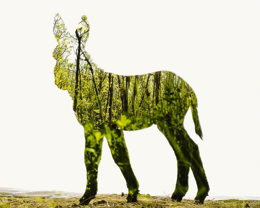 Miranda-Donkey-Foal-Ash-Trees-II1.jpg