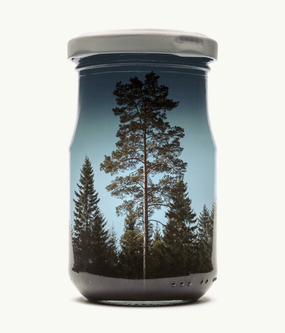 Pine Tree, large, edition of 6 [only a couple left]