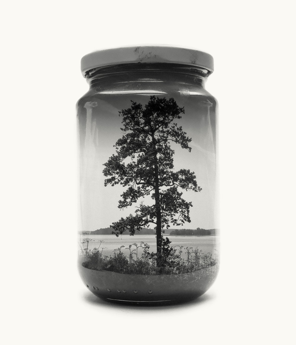 Jarred Tree, medium size, edition of 20 [only a few left]