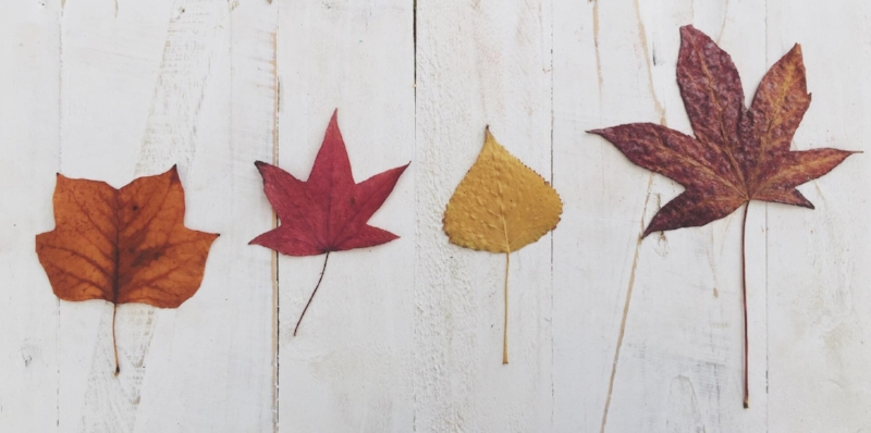 Leaf line up.jpg