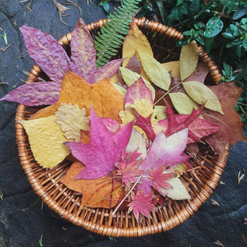 Basket of leaves - square crop.jpg
