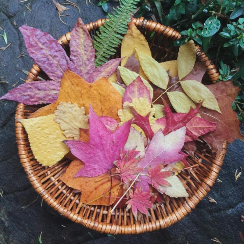 Basket of leaves - square crop.jpg