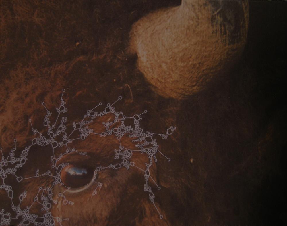 "Jennifer Murray, ""Iteration 2 (Bison)"" (2014), acrylic on inkjet print, 8"" x 10"" $850 USD"