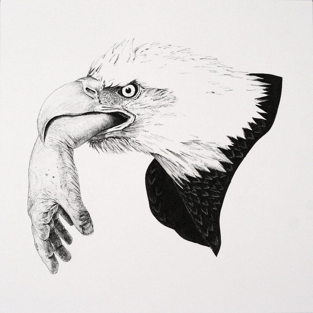 Tafur_Bald Eagle(2017)_pen on paper_12x12_unframed.jpg