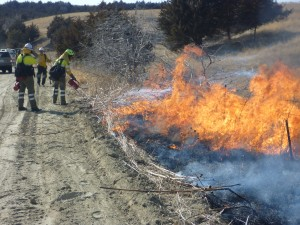 """""""Firefighters lighting along the fireline at the Loup River Training Exchange. Photo by Jeremy Bailey"""""""