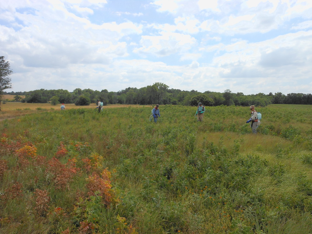 The Heartland Exotic Plant Management Team treats sumac at George Washington Carver National Monument. Plants begin turning red after treatment giving a fall like appearance.