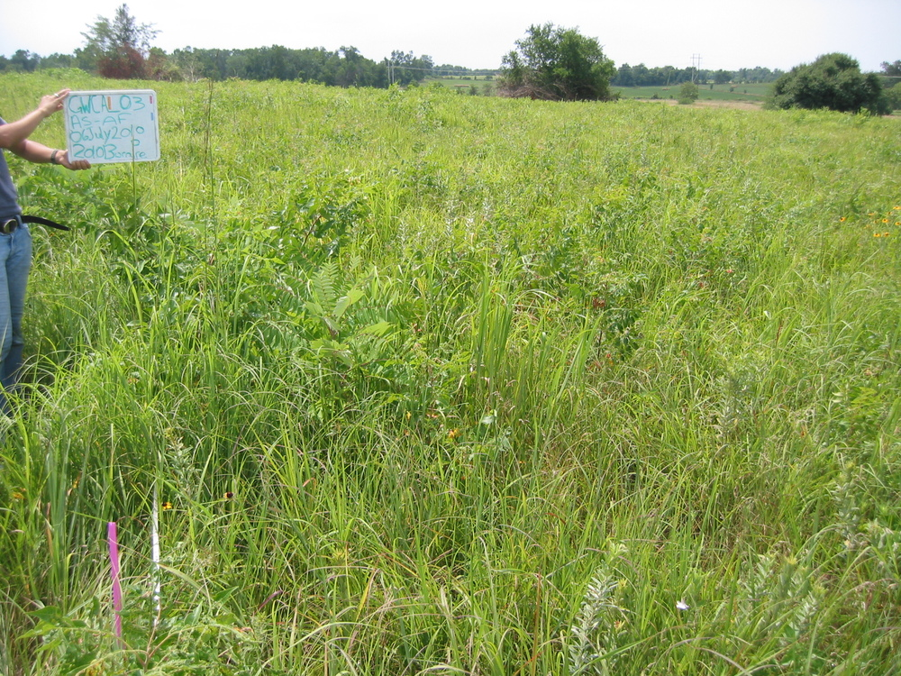 Pre-burn monitoring photopoint image shows the abundance of sumac in the restored prairie at George Washington Carver National Monument.