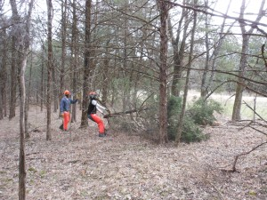 Conservation Corps of Iowa crew cutting cedars at Pea Ridge National Military Park.