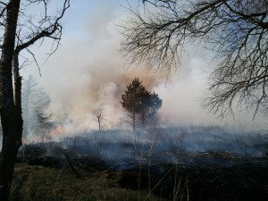 Prescribed fire aimed at cedar control at Pea Ridge National Military Park.