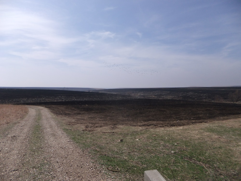 Post burn at the Tallgrass Prairie National Preserve, KS. HTLN photo.