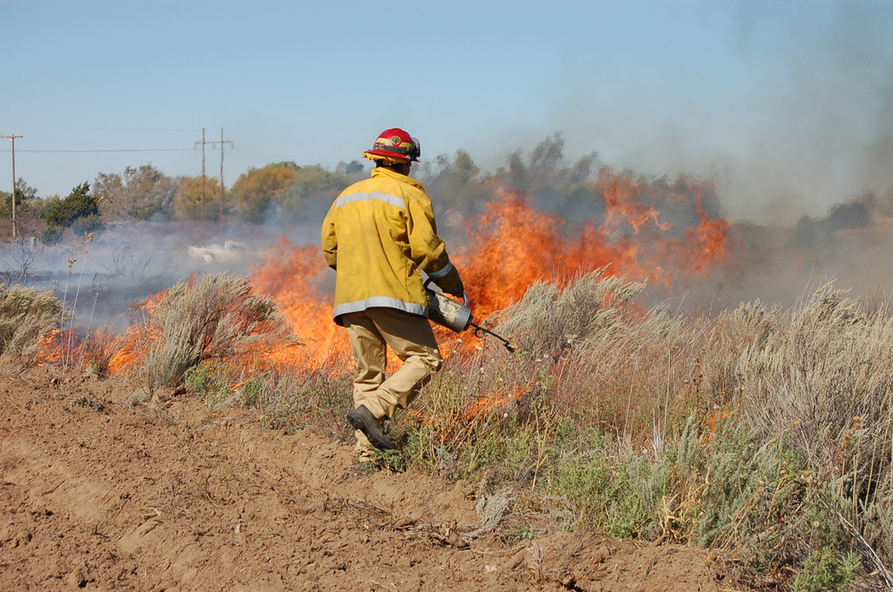Oklahoma State University fire crew burns research plots at Cooper Wildlife Management Area. Photo by Stephen Winter.