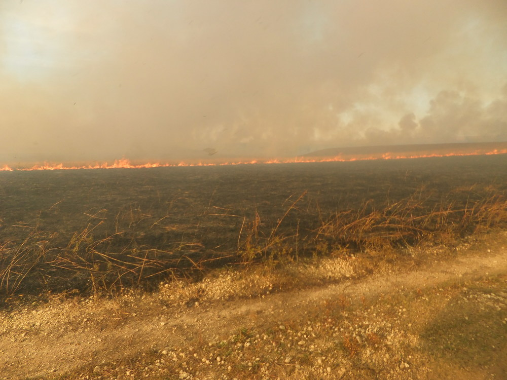 TAPR burn October 16, 2014. This burn at TAPR was conducted for administrative goals.