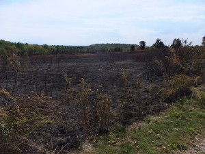 Wilson's Creek National Battlefield in Missouri conducted a prescribed fire for glade and grassland management in October 2014.