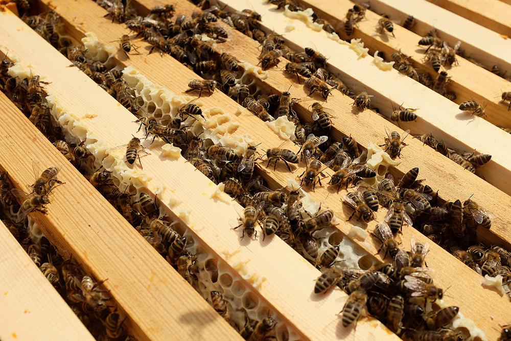 Hive Society_Hives.jpg