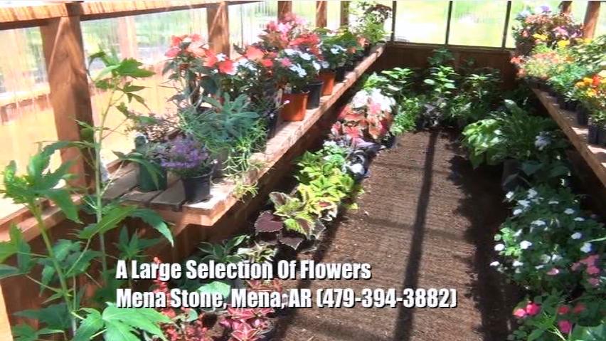 Plant Nursery - Flowers