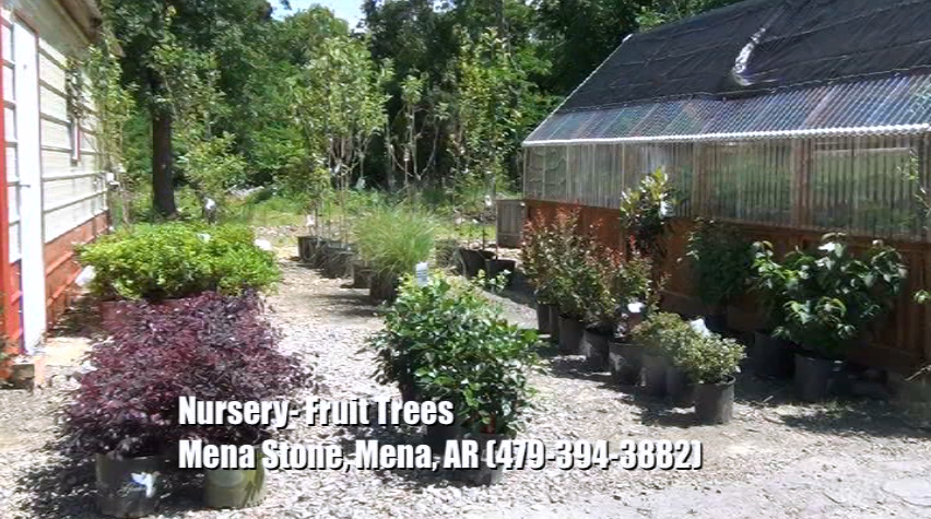 Plant Nursery - Fruit Trees