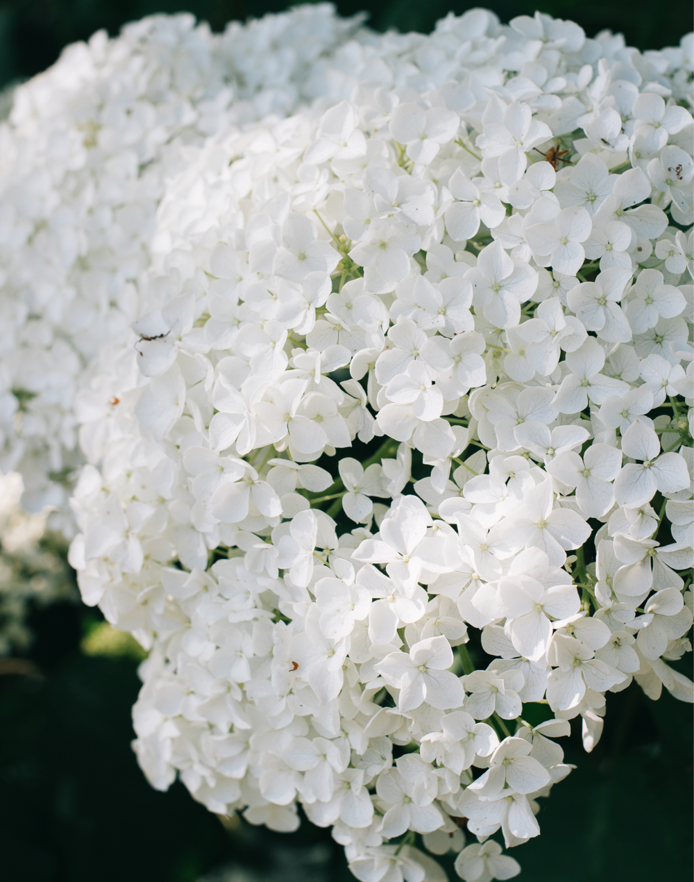 From-Roses---Flowers-2.png