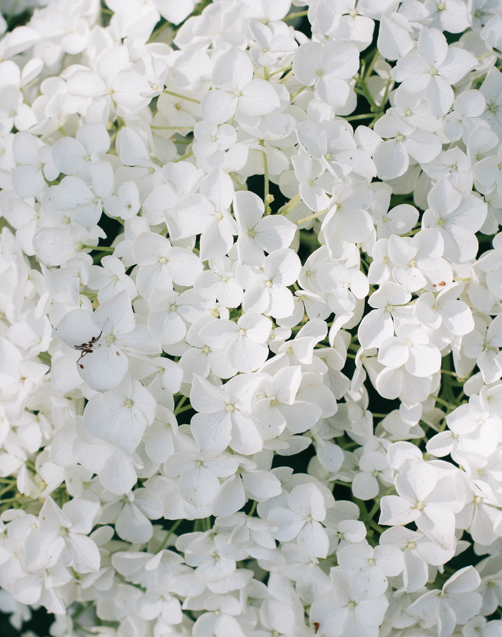 From-Roses---Flowers-4.png